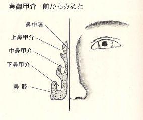 bikoukai-mae