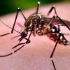 【ジカ熱】アメリカがジカ熱でパニック状態、妊婦だけで157人感染、メジャーリーグもオリンピック合宿も中止について